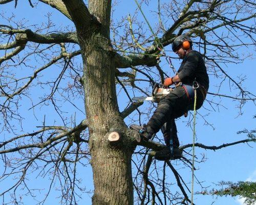 Tree4-min