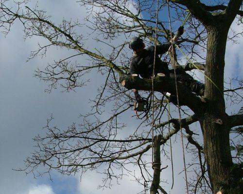 tree7-min