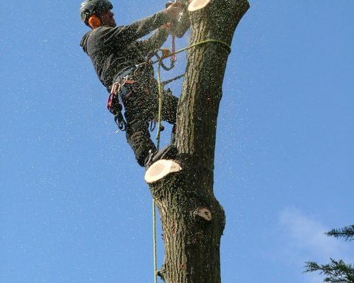 tree9-min