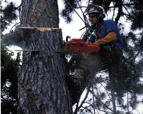 Dave-tree-pic-2-min