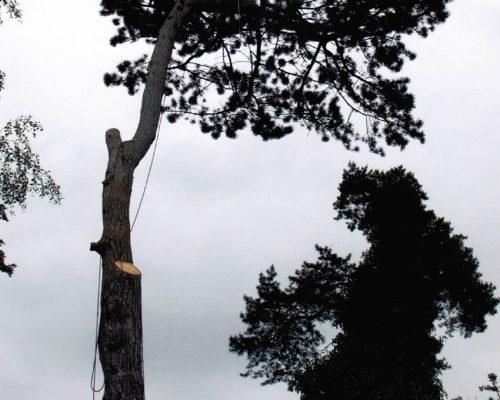 Dave-tree-pic-min