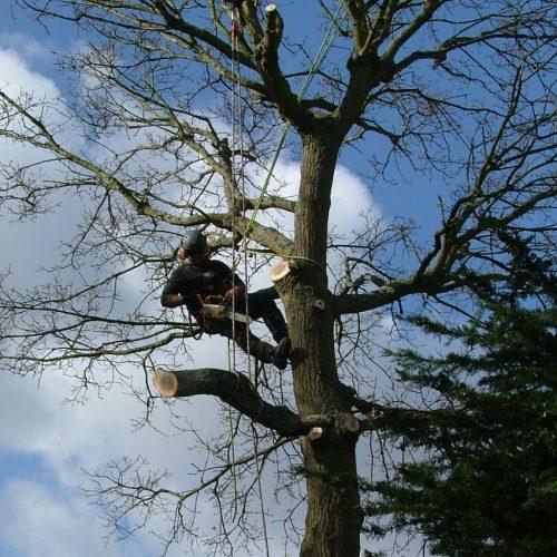 Tree-2-min