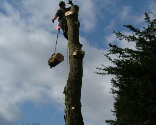 tree11-min