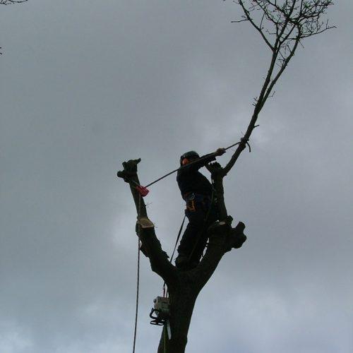 tree8-min